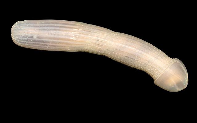 Bạn không tin nổi đâu, giới khoa học vừa tìm thấy loài vật kì dị này dưới đáy biển nước Úc post thumbnail image
