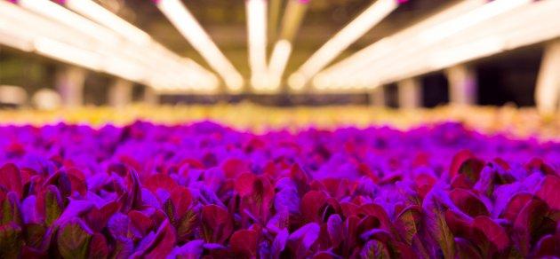 Trồng rau sạch quanh năm không cần đất và ánh sáng mặt trời, startup này hứa hẹn giúp người nông dân tăng năng suất lên 130 lần post thumbnail image